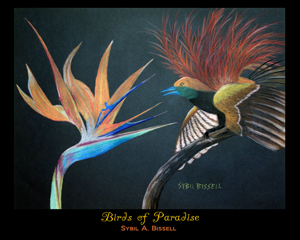 Birds of Paradise by Sybil A. Bissell