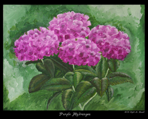 Purple Hydrangea by Sybil A. Bissell